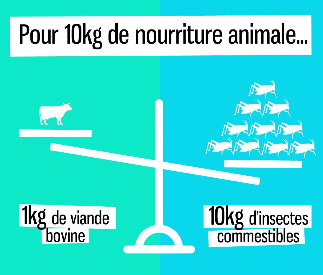 Alimentation : manger des insectes pour nourrir la Planète